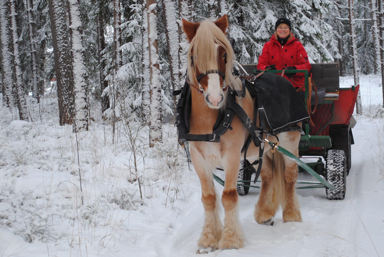 Åk Häst och vagn på sportlovet i Hemlingby