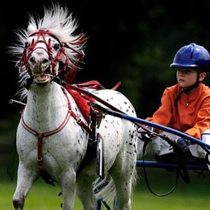 Ponnytravtävlingar i Tingsryd 2019