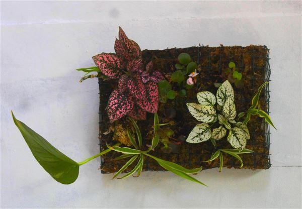 lebeaupays# Atelier tableau végétal