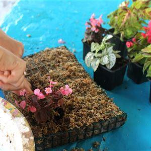 lebeaupays# Pflanzenbild-Workshop