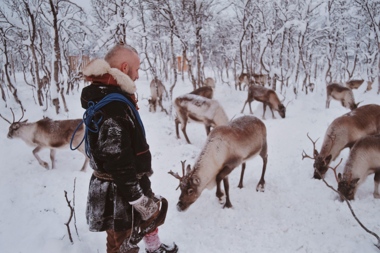 Reindeer Sledding with Saami Culture - Tromsø Lapland