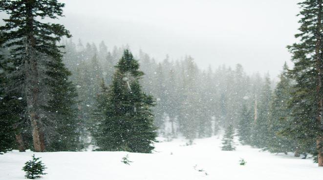Workshop - ''Cold Weather Survival'