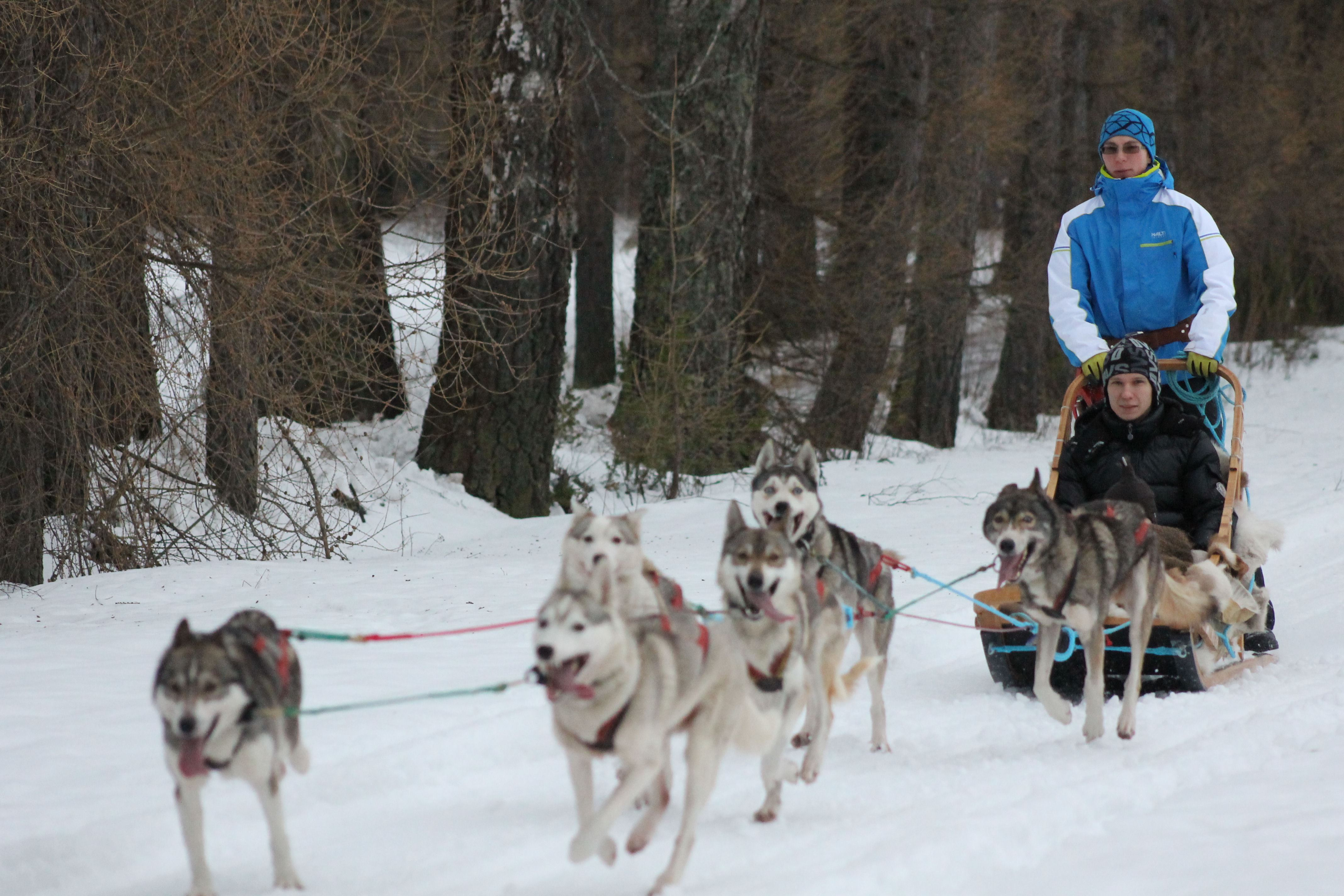 Husky safari vacation in Kullasmarina, 2 days