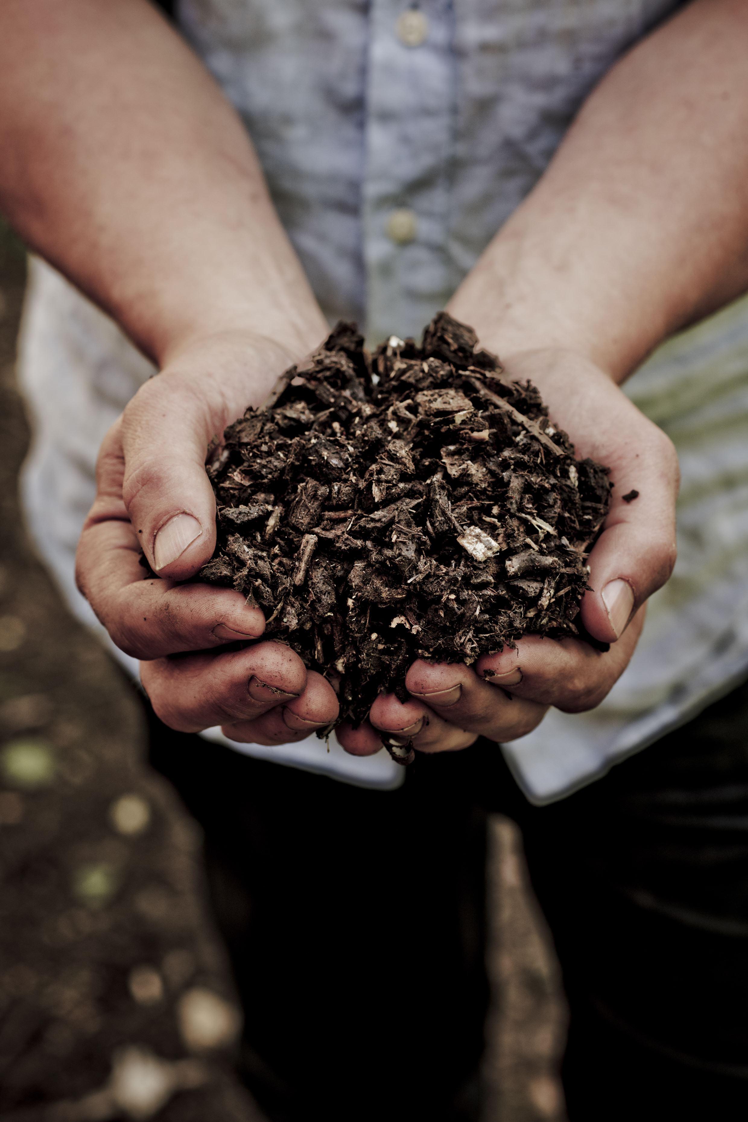 Mångfald och hälsa för träd och jord