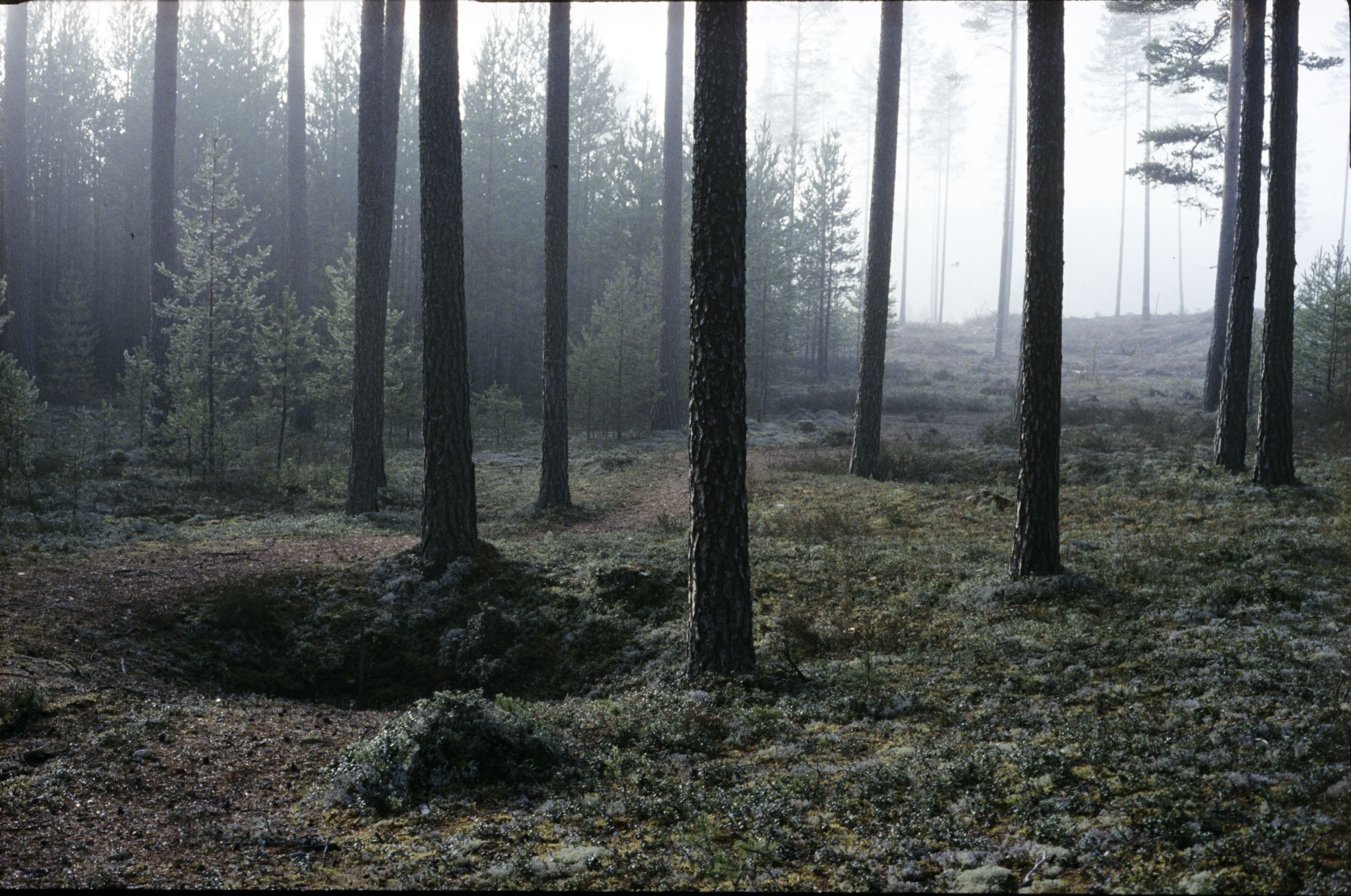 Arkeologivandring vid Ivarsnäs - OBS!!! FULLBOKAT!!!