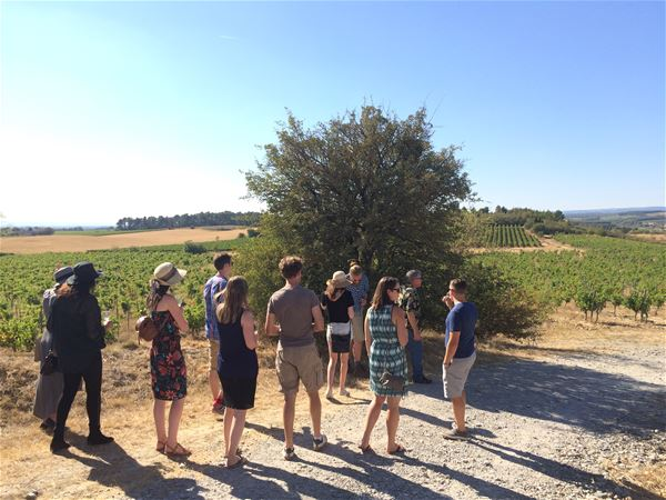Excursion by minibus - Day - Visit of 3 vineyards & wine tasting - Private excursion - F / GB - Trésor Languedoc Tours