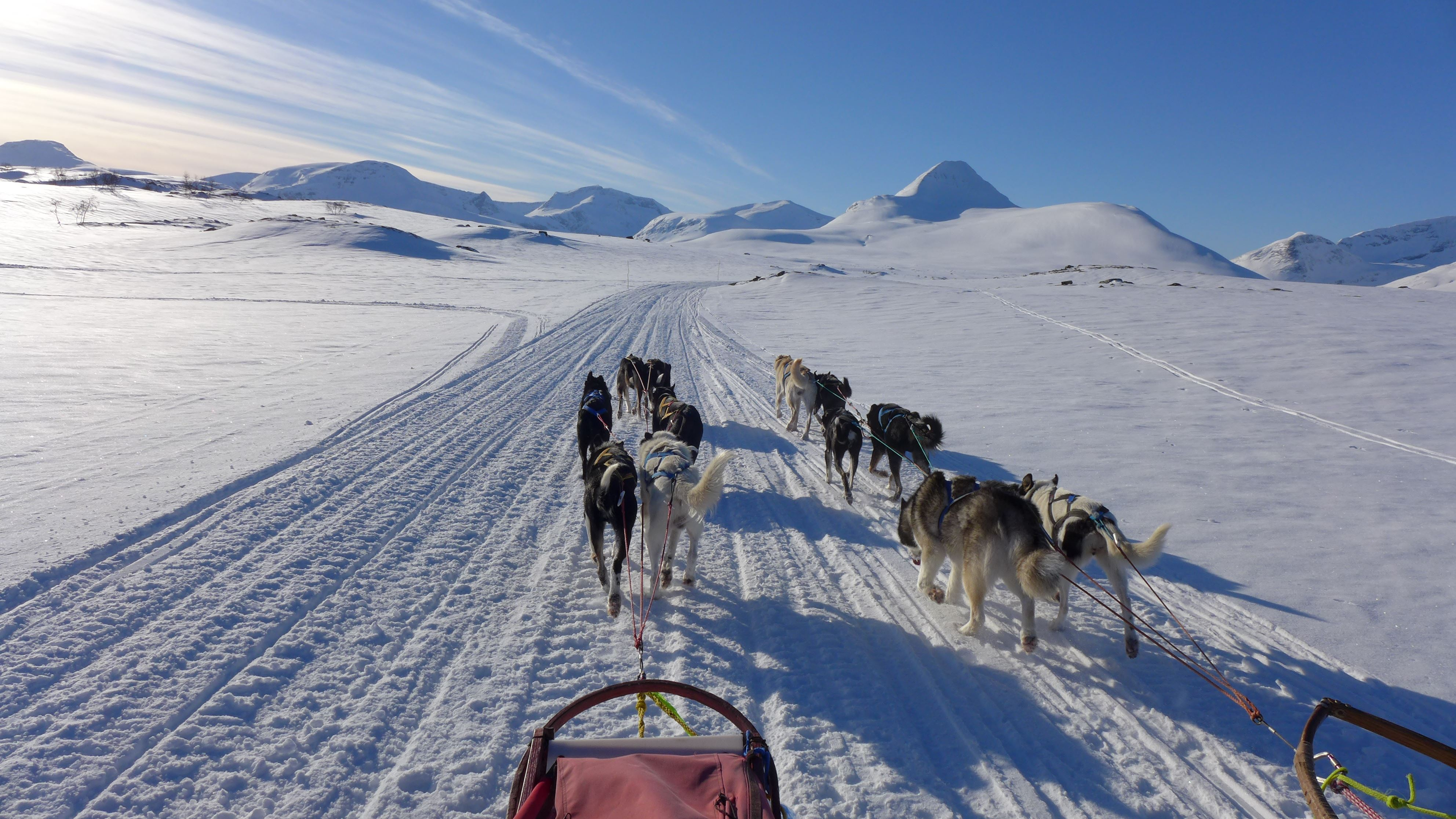Dogsledding -exclusive private tours