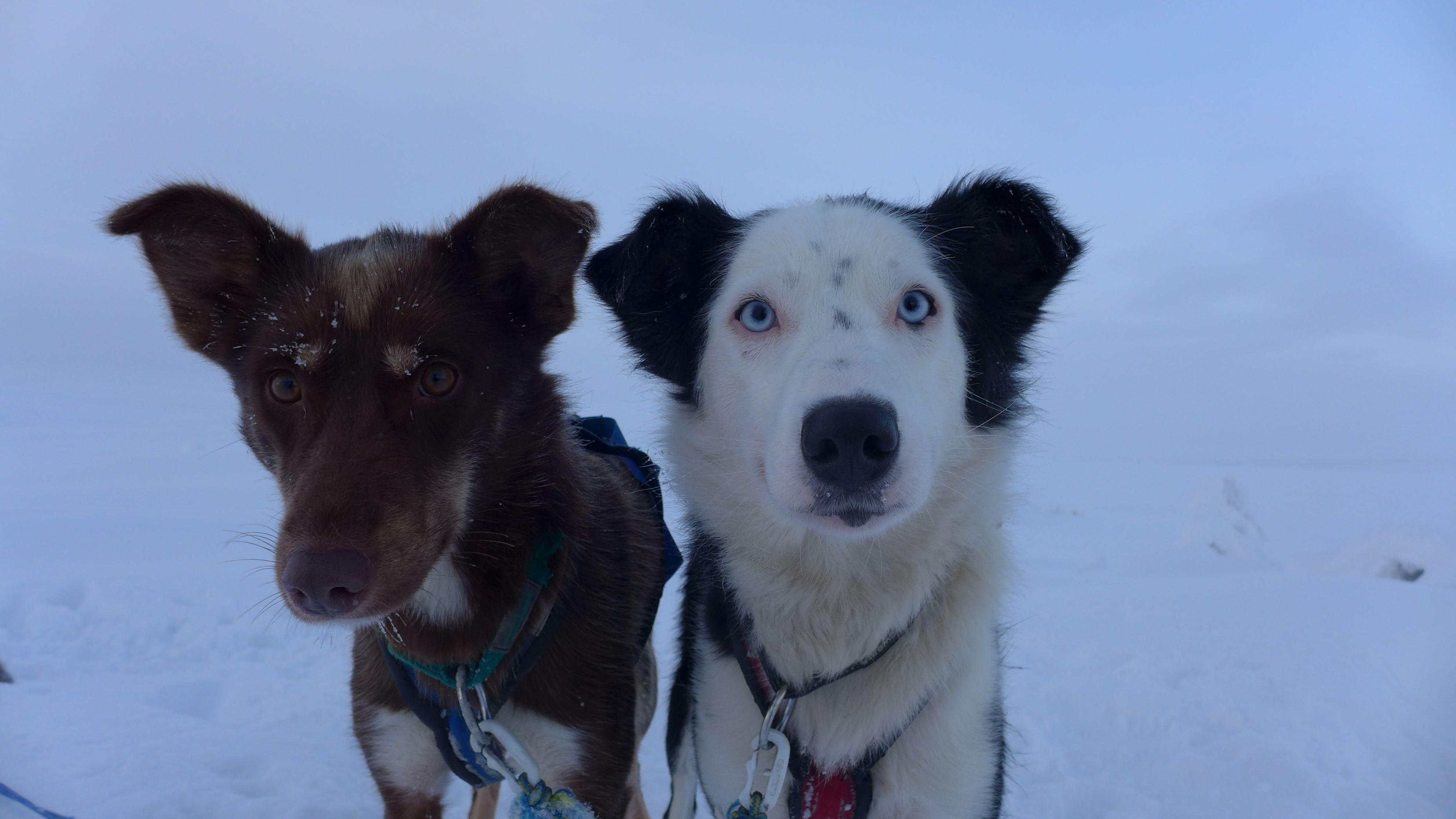 Hundekjøring -Eksklusive private turer
