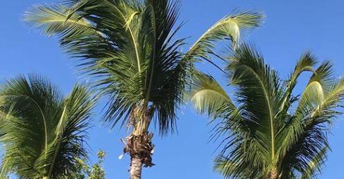 Palmsläppet