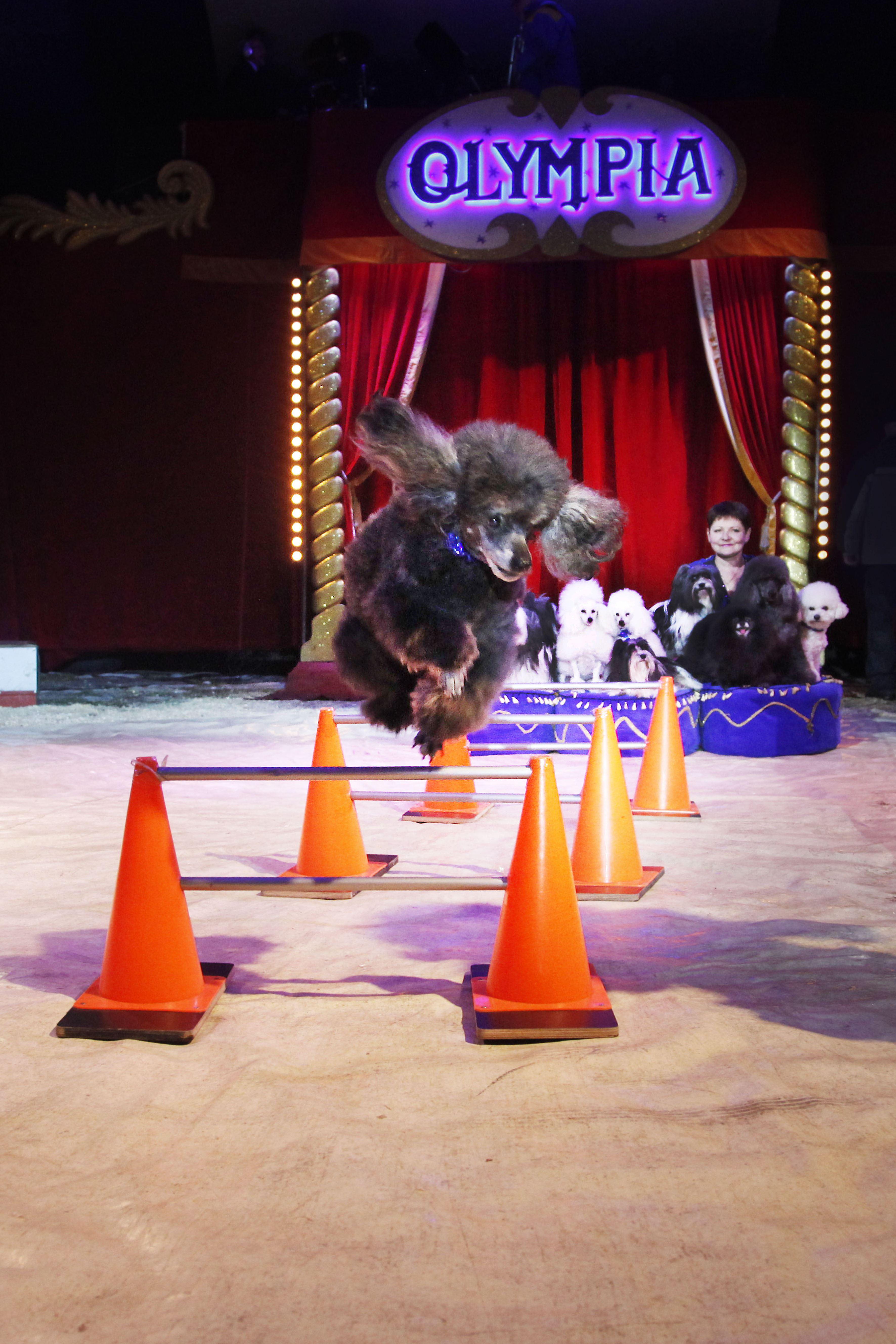 Linda Himsel,  © Cirkus Olympia, Cirkus Olympia på Slätten