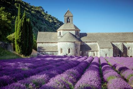 Lavender Tour Circuit des lavandes - Demi- journée