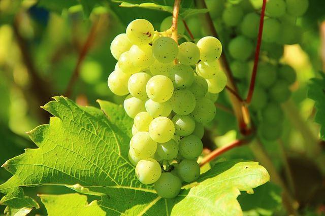 Wine Tour circuit des vignobles - Journée