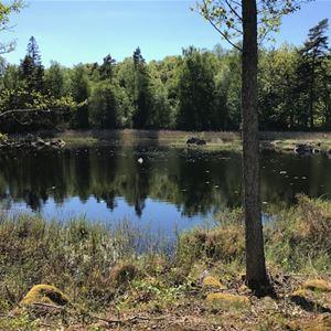Lär känna Åsnens nationalpark - Trollberget