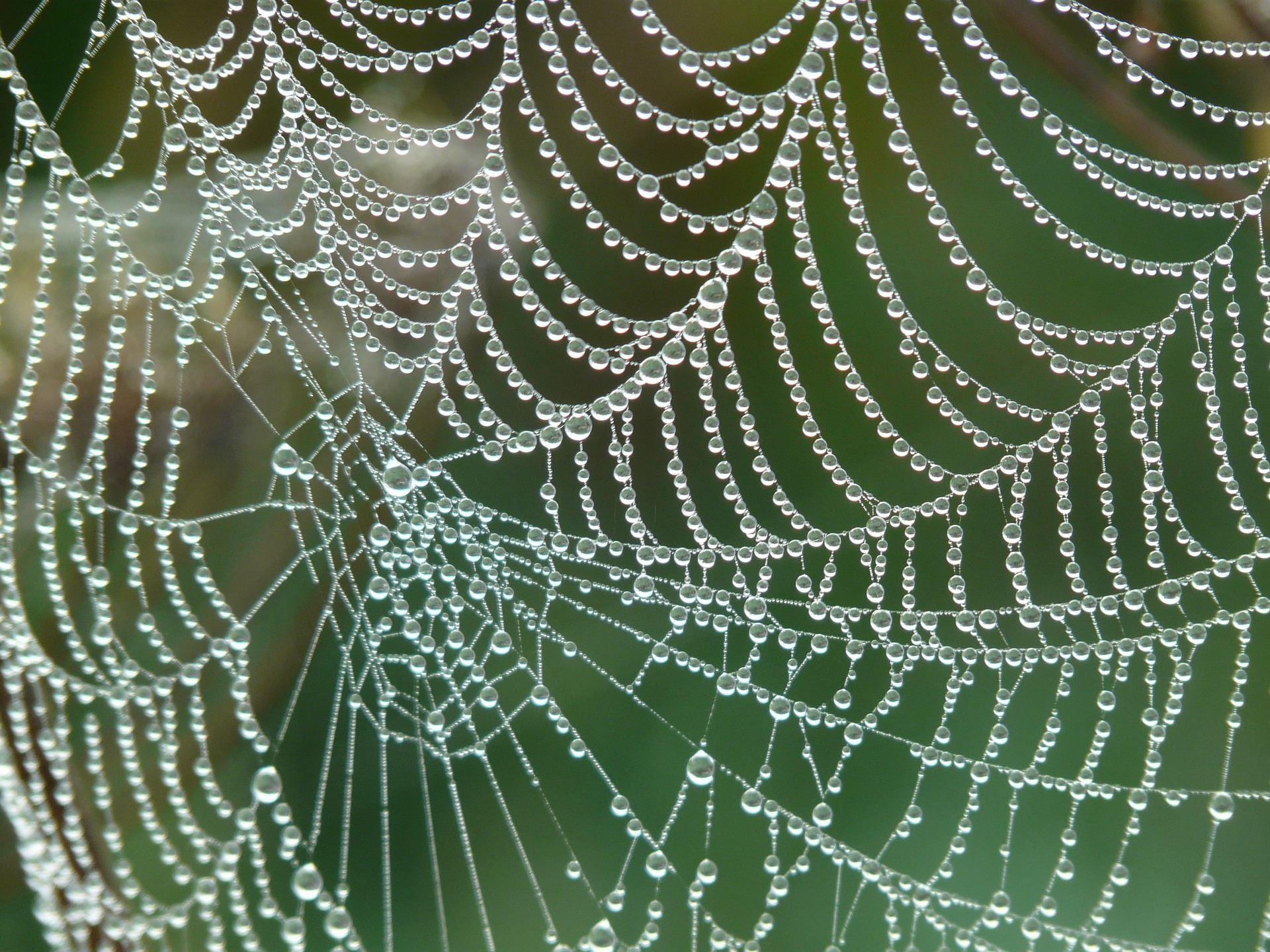 Imse Vimse spindel i Åsnens nationalpark
