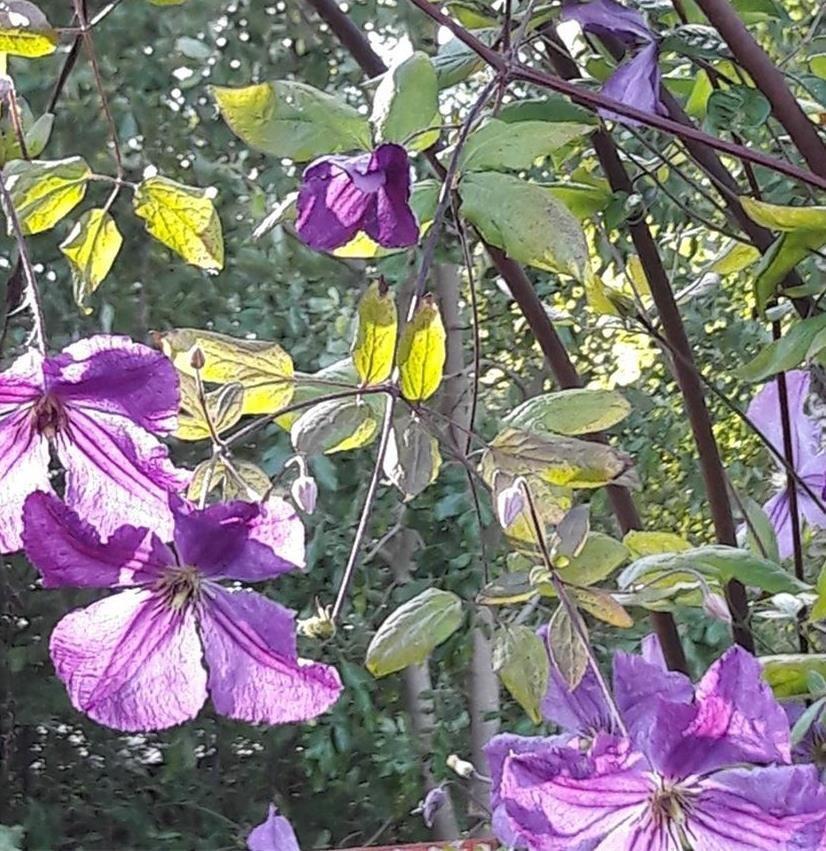 Växthelg Bäsna Trädgård sommarplantor och blommande amplar