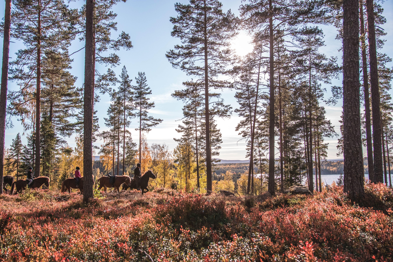 Hölesjö och Höleklack Långritt