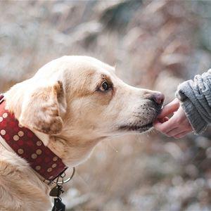 Nationell hundutställning