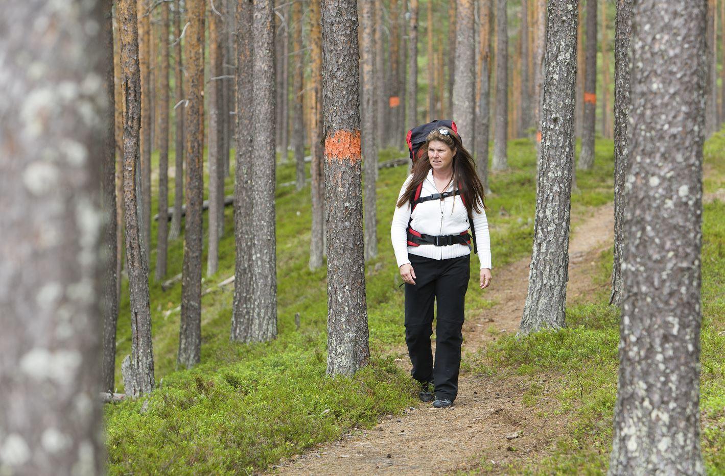Foto Calle Bredberg,  © Visit Umeå , Vandring längs Öreälvsleden
