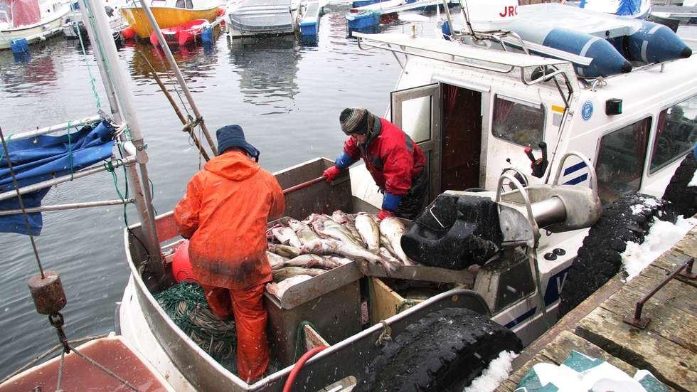 Arctic Fish Adventure