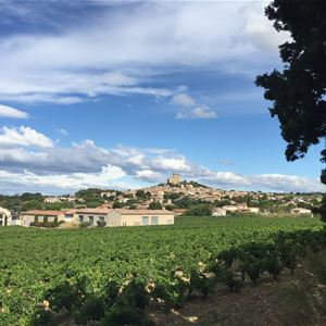 Wine and the Pope: Châteauneuf-du-Pape - Avignon