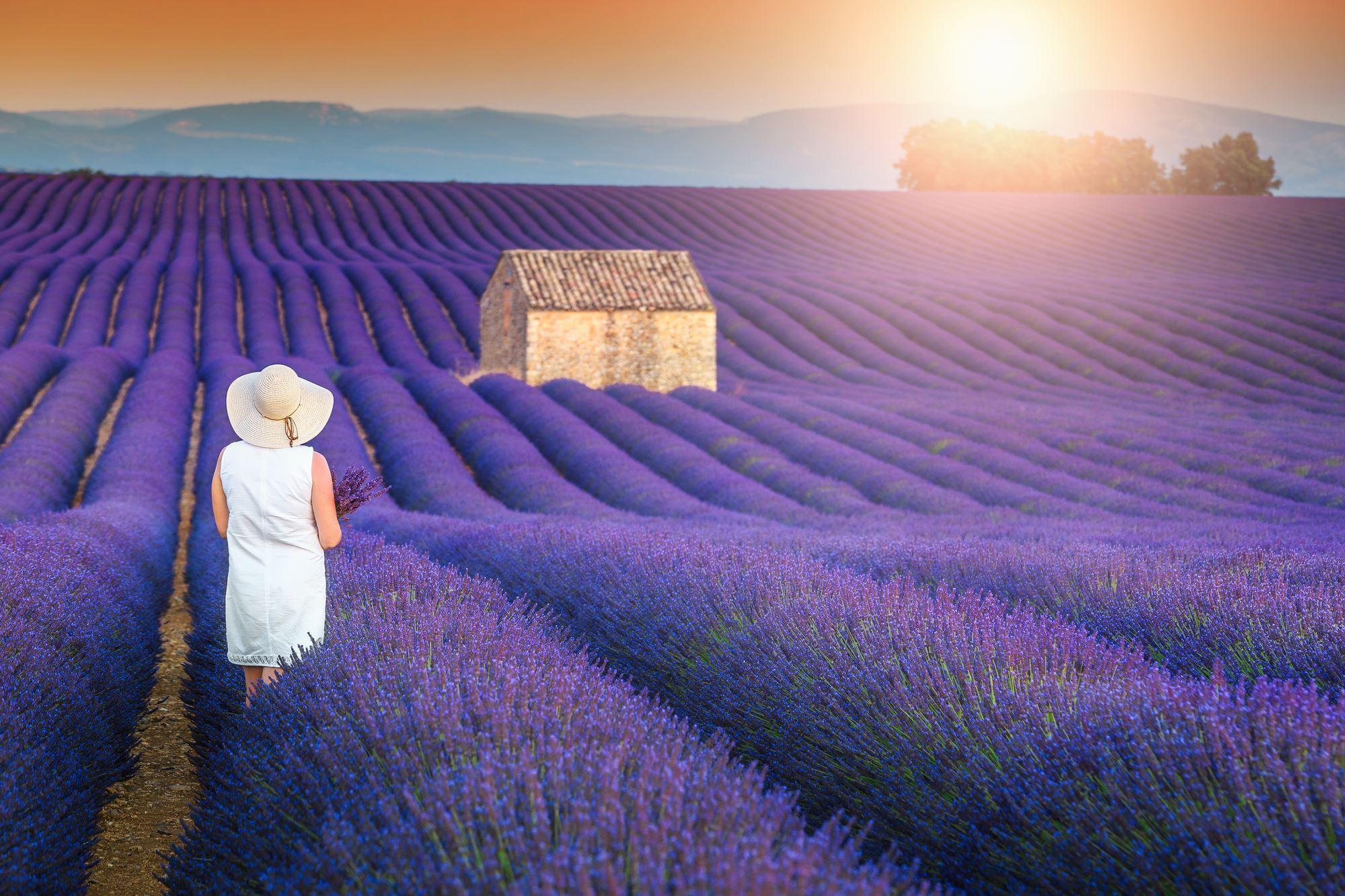Lavender Fields in Valensole