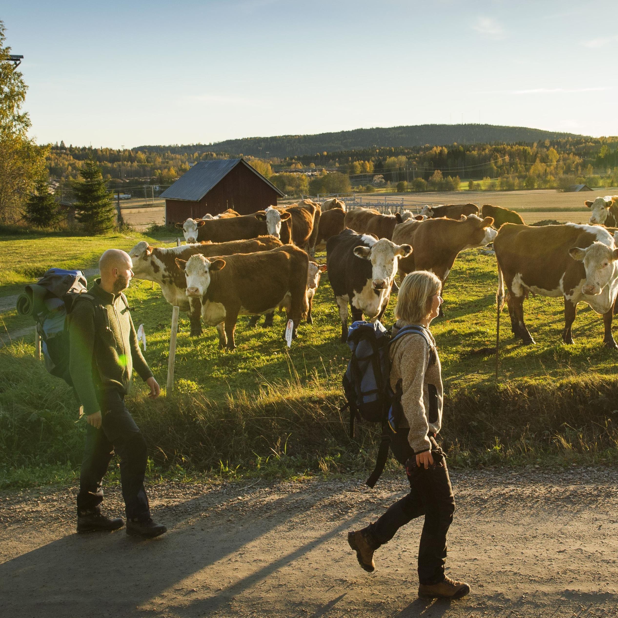 5 söndagars pilgrimsvandring S:t Olavsleden
