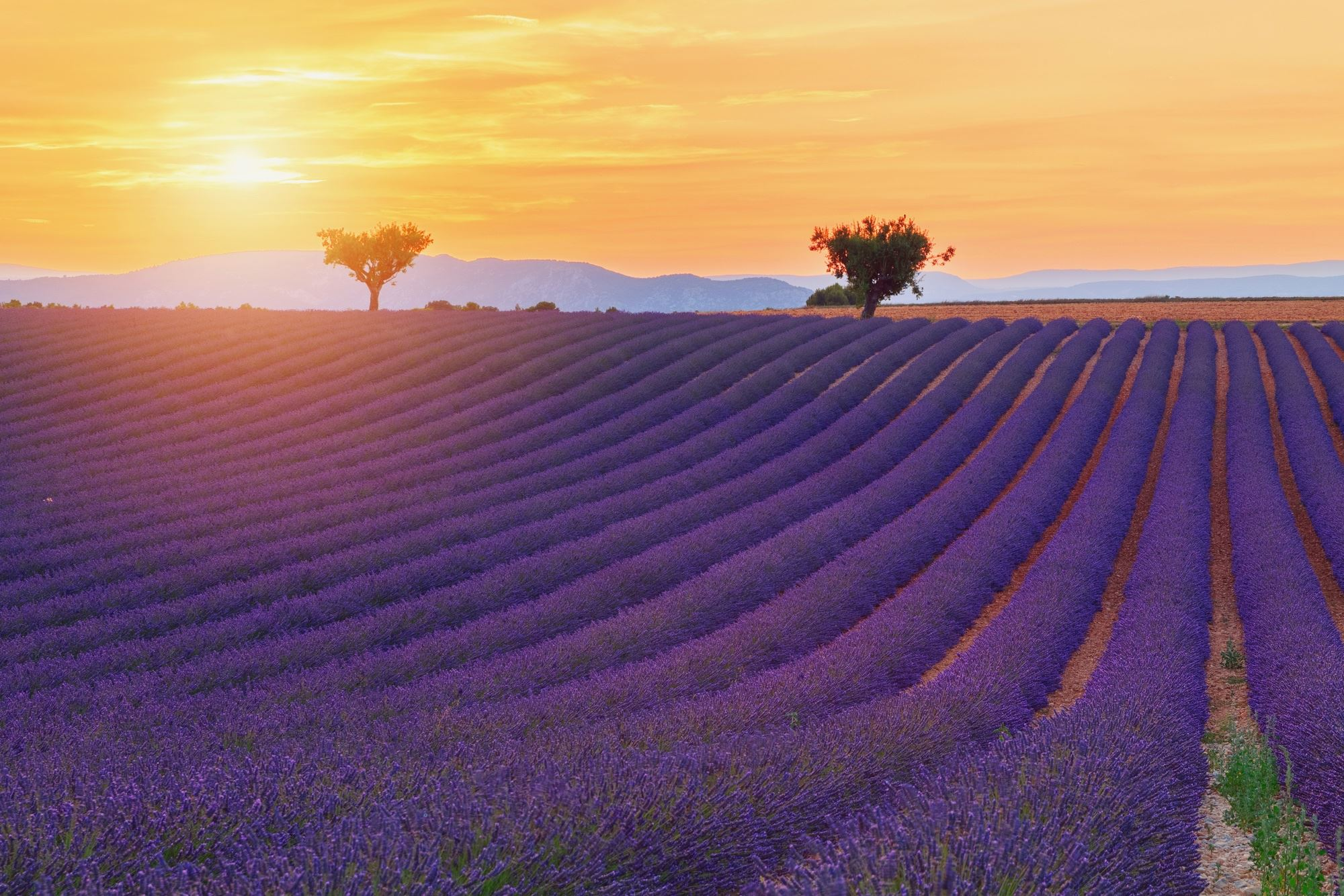 PHOTOGRAPHIC TOUR OF LAVENDER IN VALENSOLE