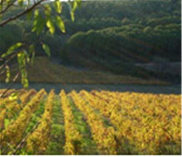Dégustations de Vins - Château le Bouchat Alaux