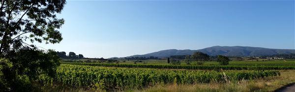 Dégustation de vins - Domaine Sainte Marie de Crozes