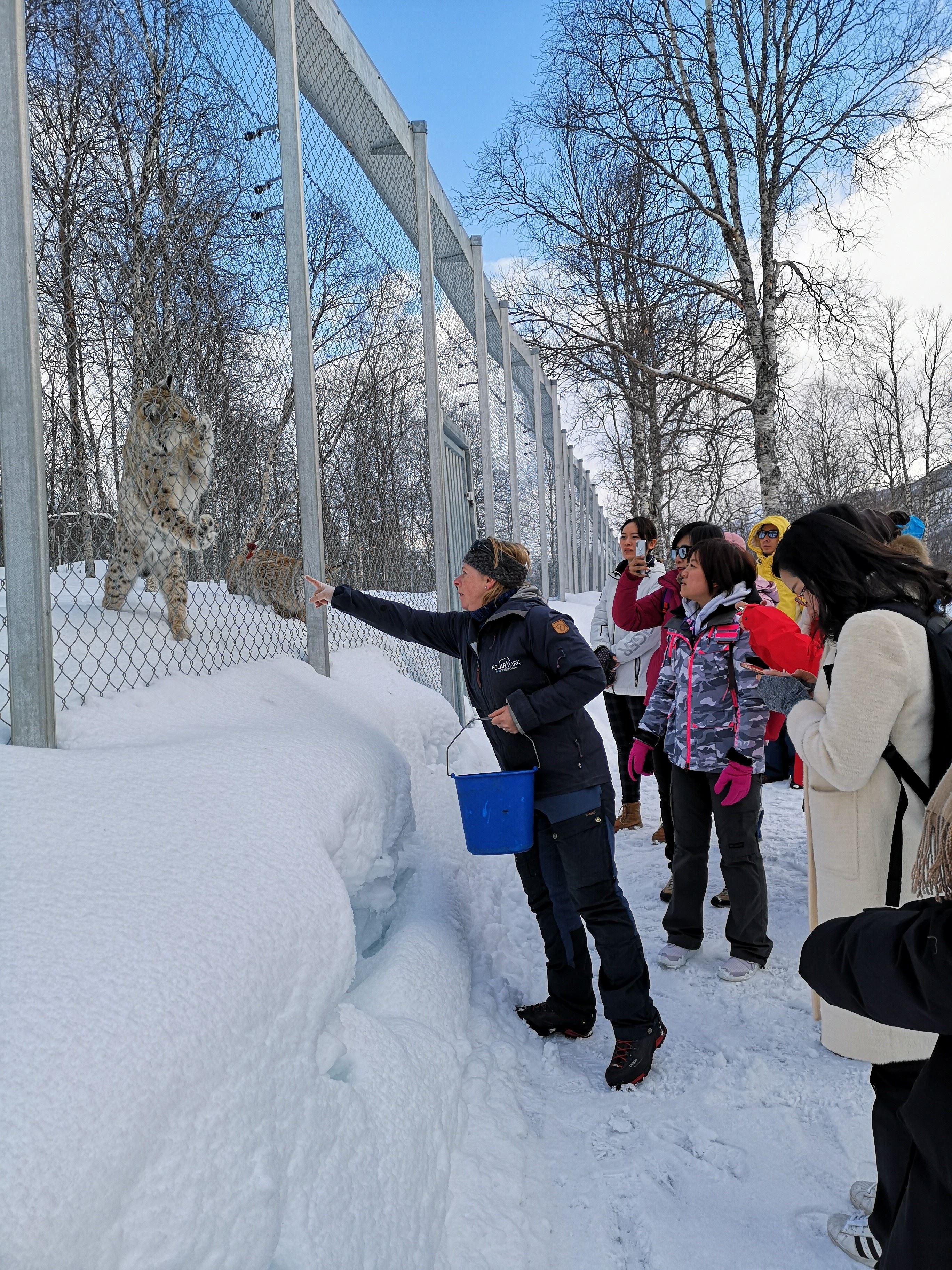Polar Park inkludert transport vinter