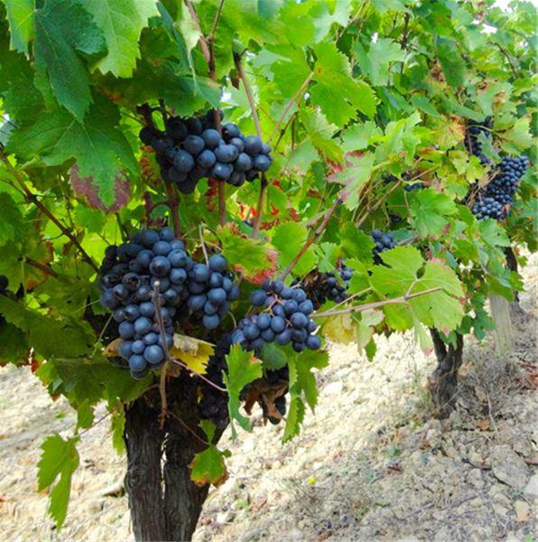 Dégustation de vins - Domaine de Fontanille Haut
