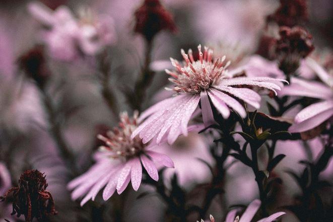 Bilder med trädgårdstema