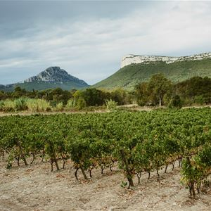 St Guilhem le Désert, wine history and homemade food with Bertrand Bosc