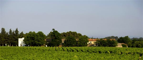 Château de Fourques : vineyard walking tour through the seasons