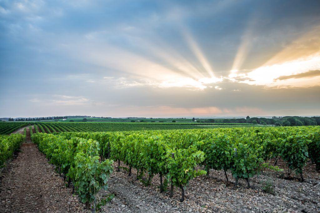 """Excursion en Vallée du Rhône dans les """"Costières de Nîmes"""" avec Vign'O vins"""