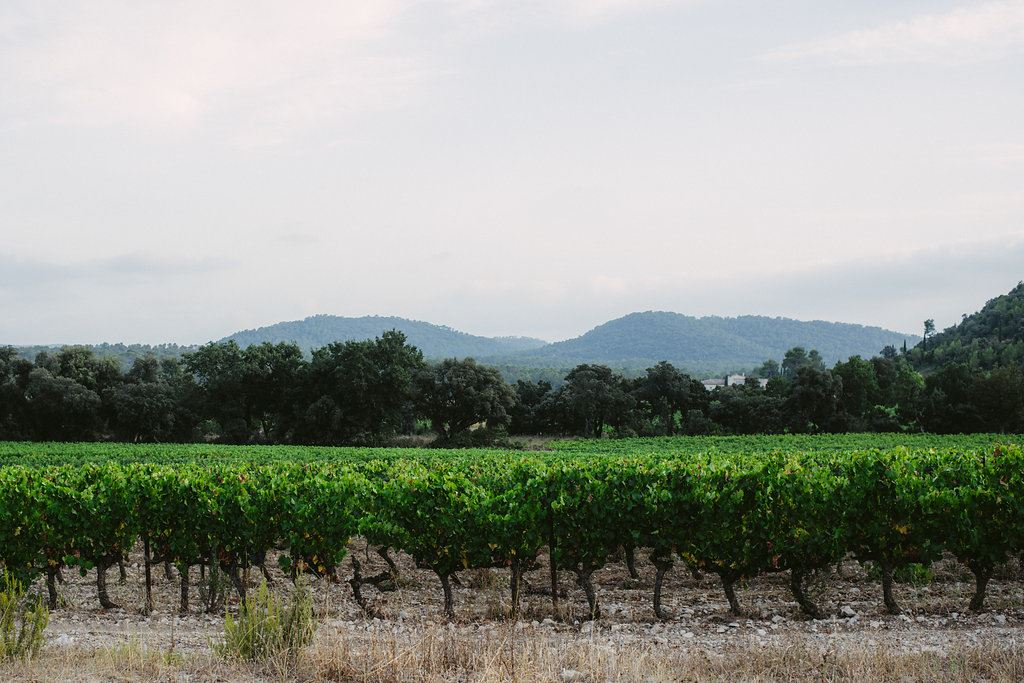 Wine tasting and dinner in Pic St Loup with Instant Terroir