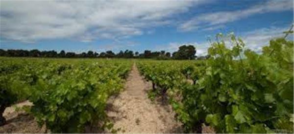 Dégustation de vins - Chateau Borie Neuve
