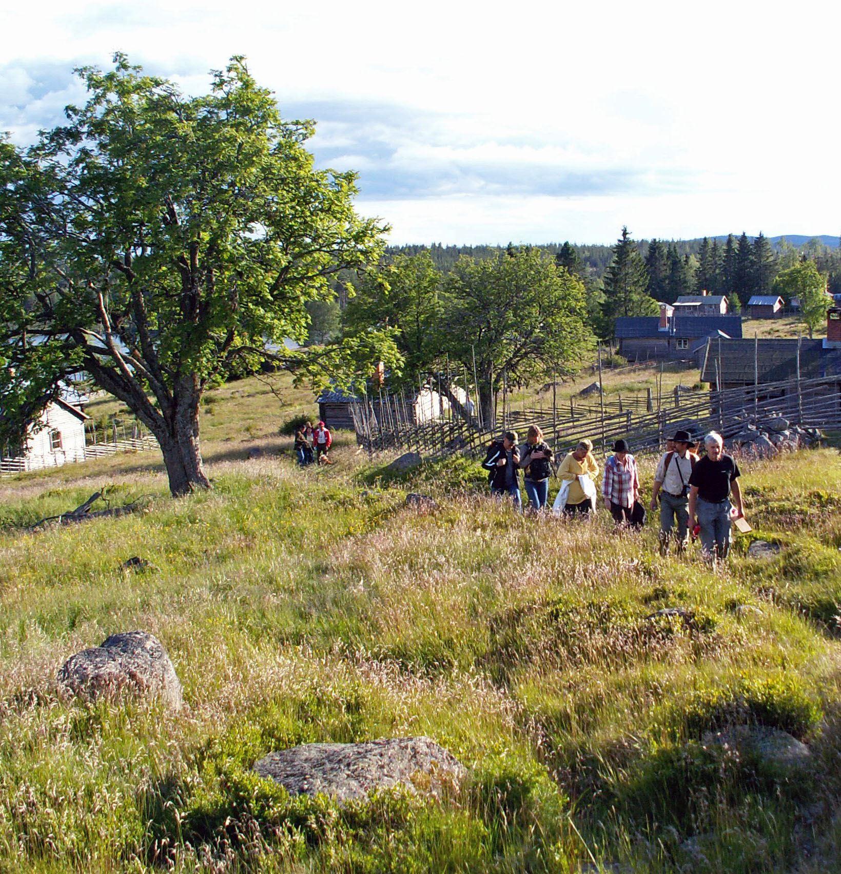 Vandring från strömmen till utsikten på Hjälpberget