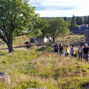 Vandring från bandyplan till Rosttjärnsvägen