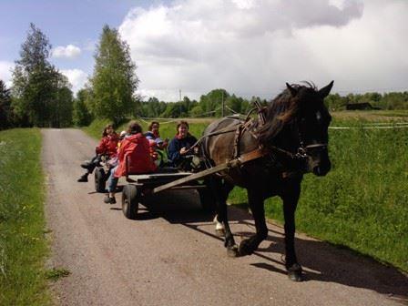 Fäbotur med häst och vagn
