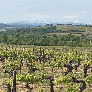 Dégustation de vins - Chateau de Couffoulens
