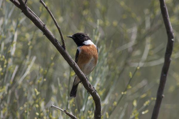 Tur med fugleværnsfonden i Saksfjed