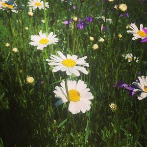 De vilda blommornas dag