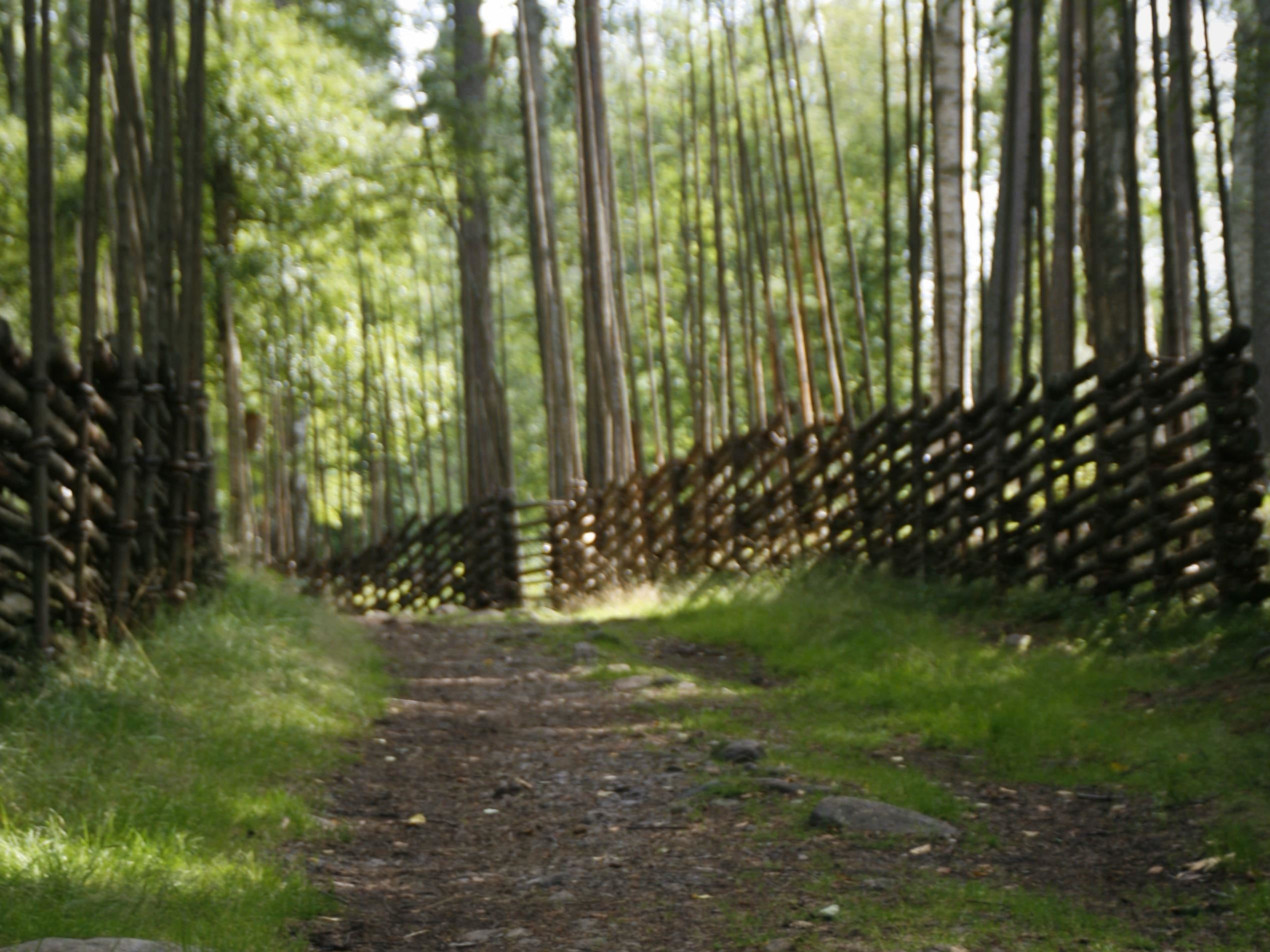 Vandring i området kring Gamla Berget-Harmsarvet-Korsgården