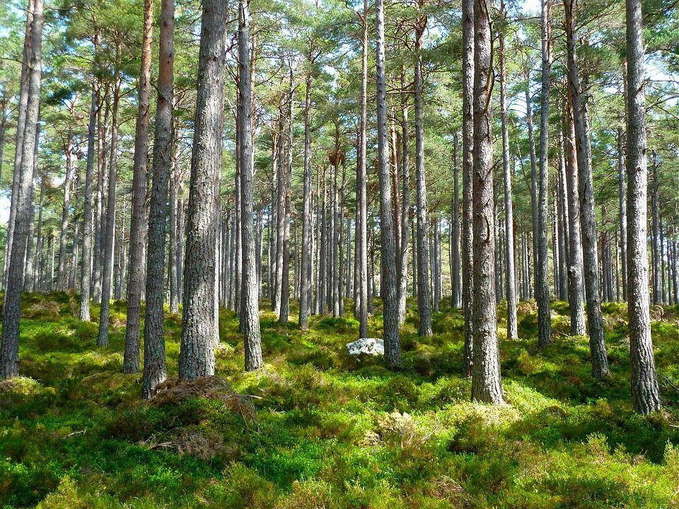 Metsävaellus