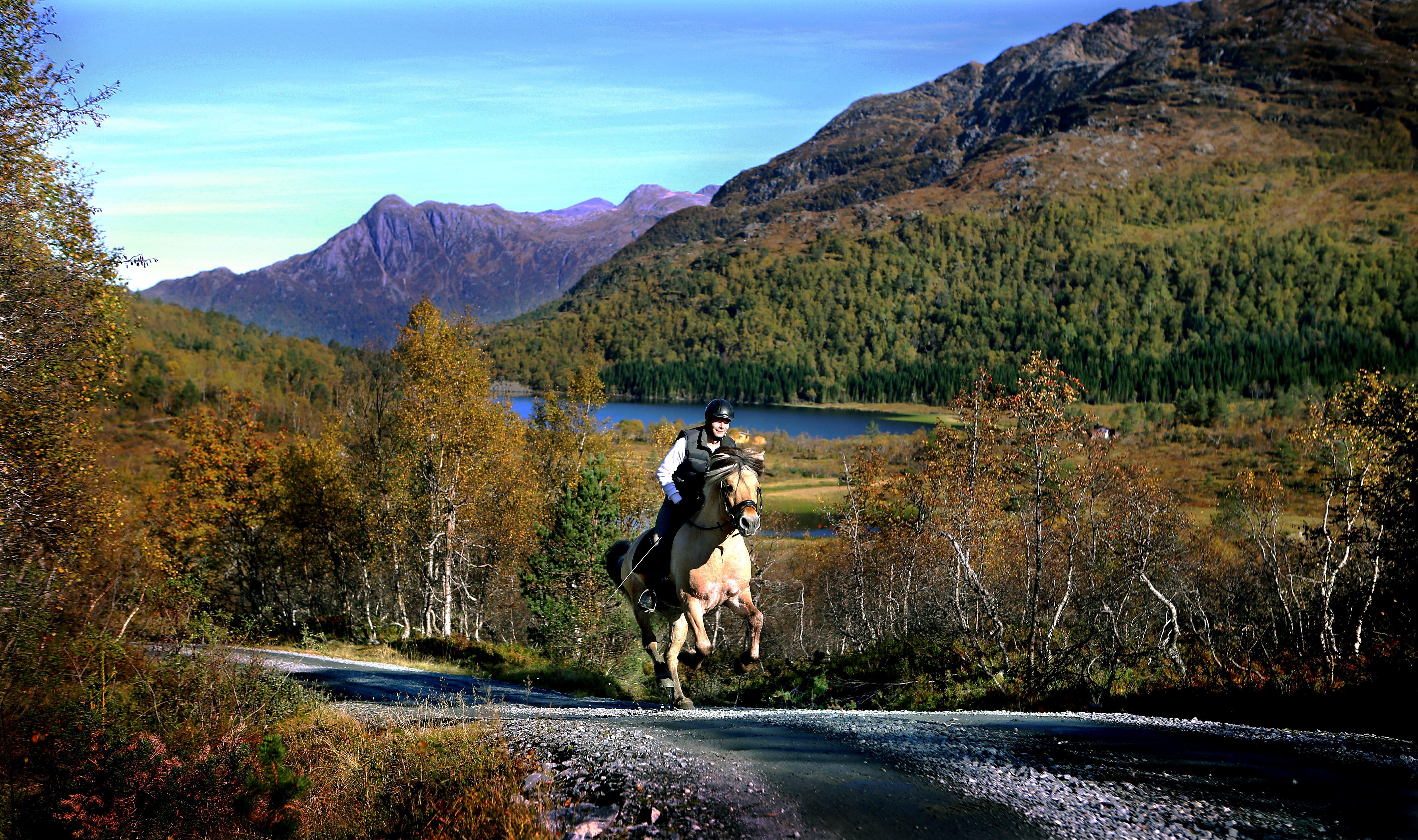 Riding classes   Norsk Fjordhestsenter