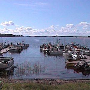 Fiskefest i Järpesbo