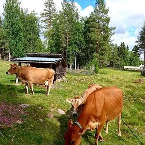 Cecilia Johansson, Älvdalens bygdevecka