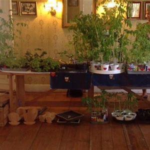Thuremarknad- växtloppis