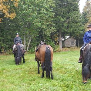 Höstspaning till häst- Silverhill Stable